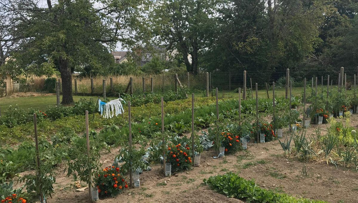 Systeme Arrosage Potager Vacances sécheresse en creuse : les apprentis jardiniers économisent