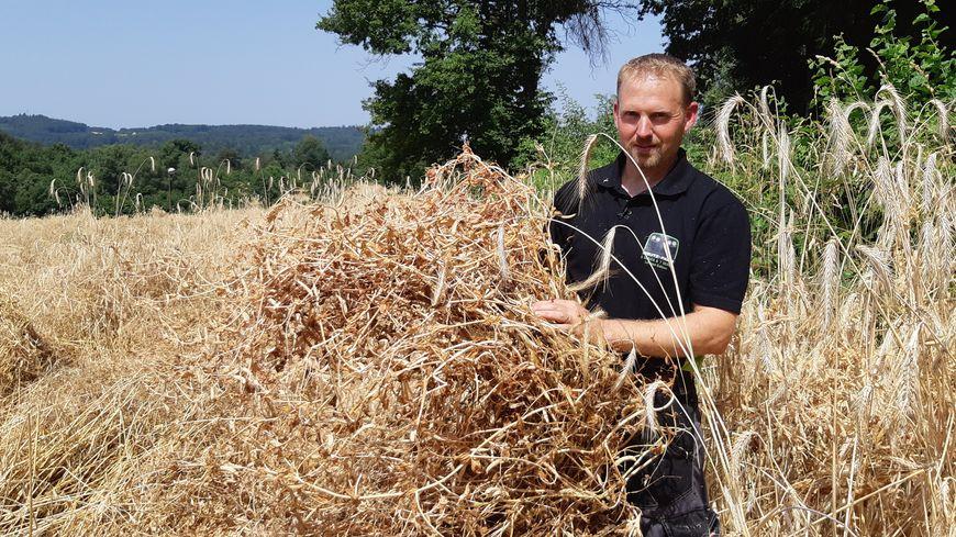 Pour la deuxième année, Sébastien Gourdoux cultive du méteil sur son exploitation à Liginiac