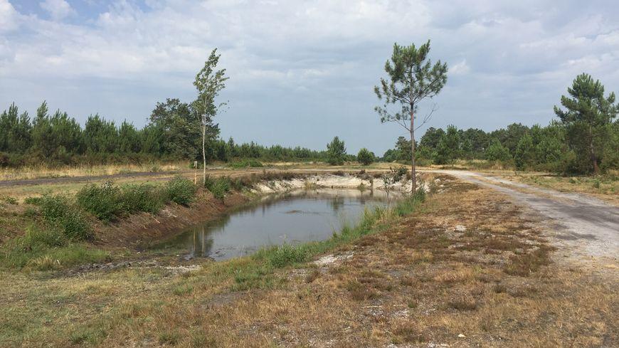 La végétation du massif forestier des Landes de Gascogne est complètement sèche.
