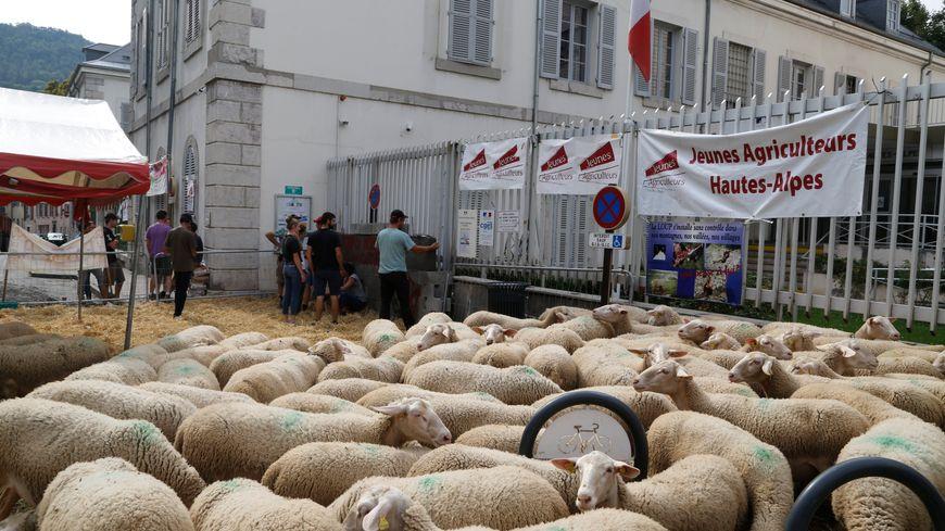 Des éleveurs bloquent la préfecture des Hautes-Alpes