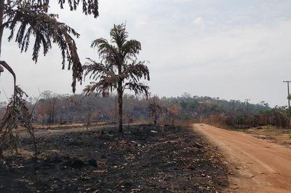 Ouest de l'Amazonie brésilienne, près de la frontière bolivienne (27 aout 2019)