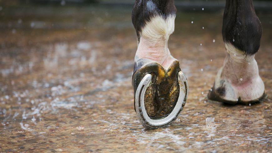 Sous le sabot d'un cheval : l'actualité du monde hippique
