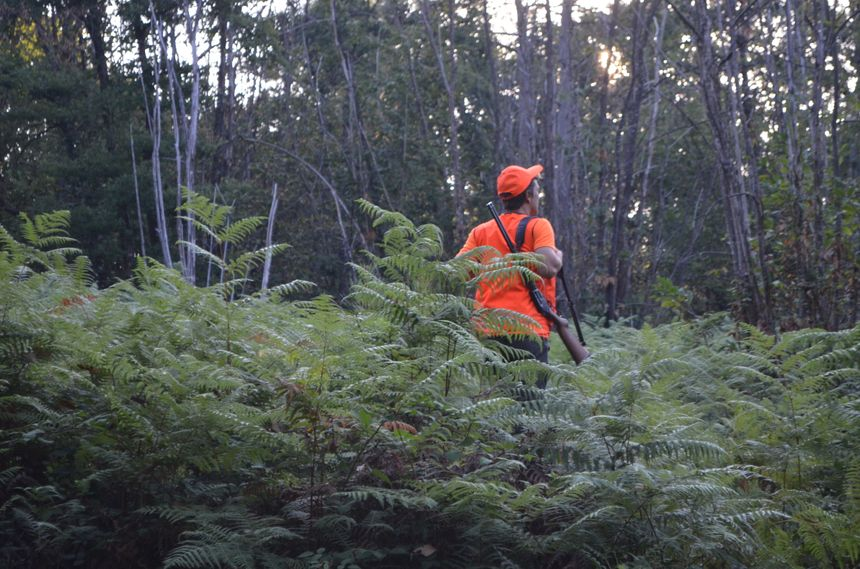 Dans les bois sur les hauteurs de Champcevinel, avec les chasseurs de sanglier