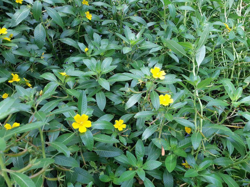 Des fleurs inoffensives à première vue
