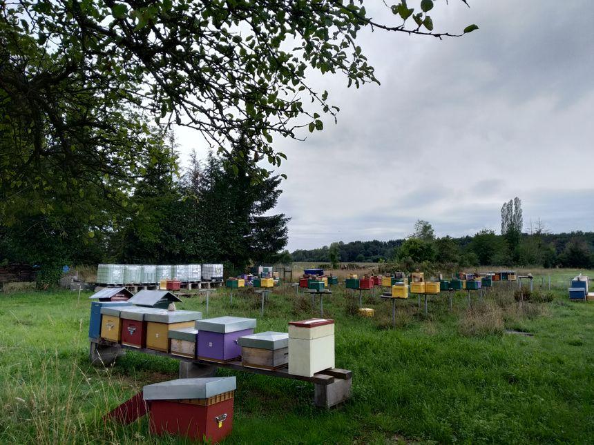 Les ruches sont installées dans un rayon de 30 kilomètres autour de Chaux, sans le nord du Territoire de Belfort