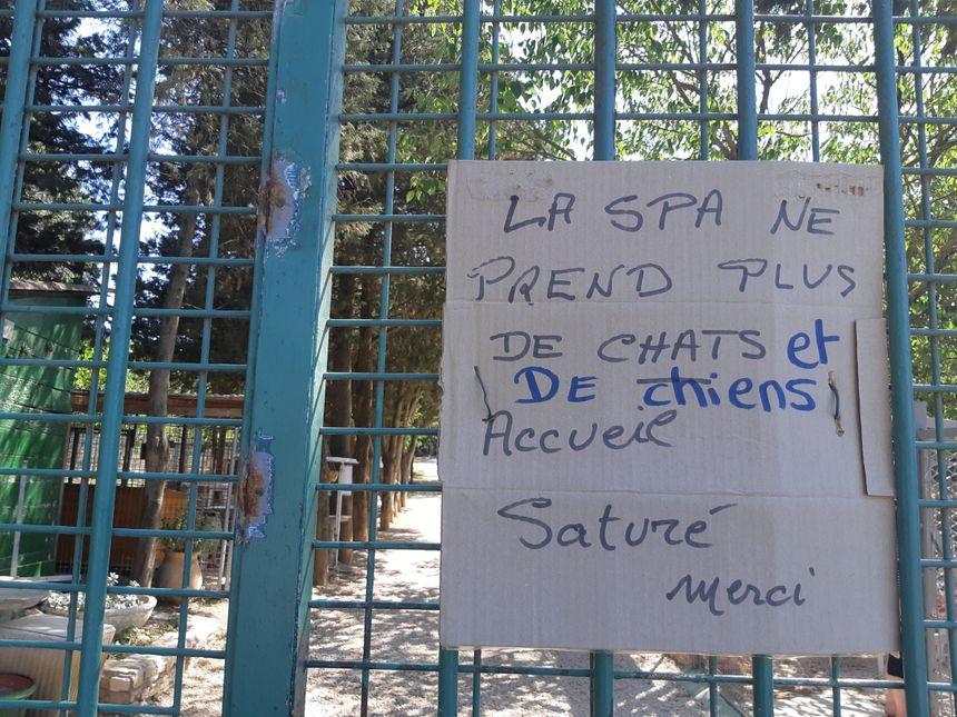 65 chiens et 150 chats actuellement au refuge de la SPA de Nîmes