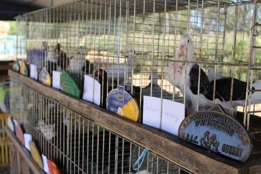 Les animaux présentés ont parfois gagné de prestigieux concours