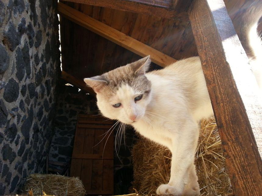 Le fameux chaton de murol au nom très original..