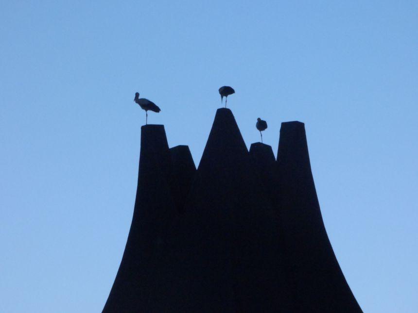 D'où viennent ces trois cigognes posées sur le toit de l'espace André Lejeune à Guéret ? © Radio France - François Fermis