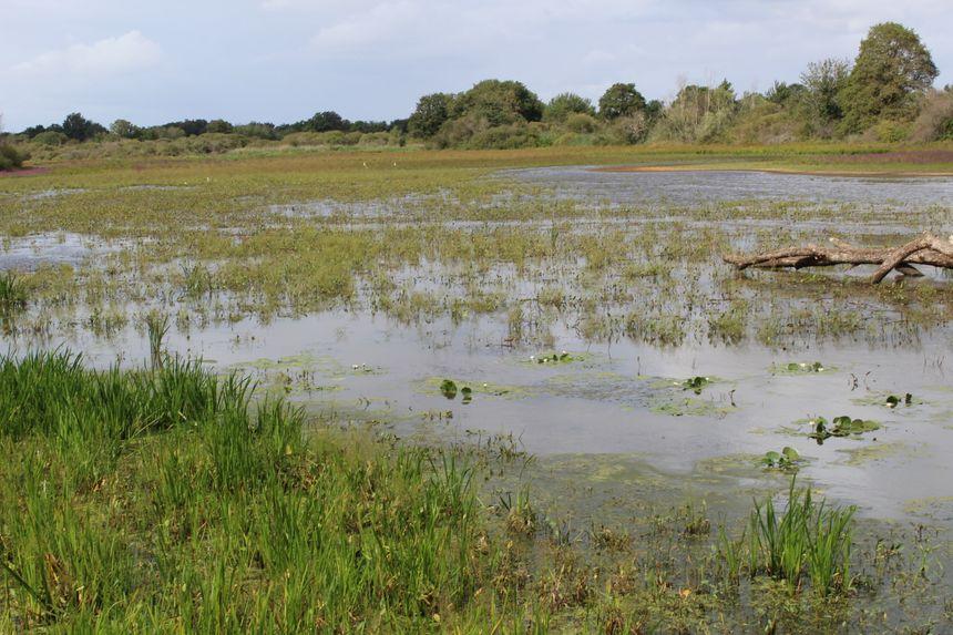 Certaines espèces ont du mal à s'adapter à cette baisse du niveau de l'eau. Les canards par exemple, trouvent moins d'endroits où nidifier
