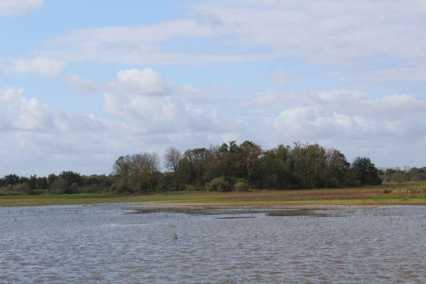 Habituellement l'eau de l'étang Massé entoure ce petit îlot d'arbres au loin
