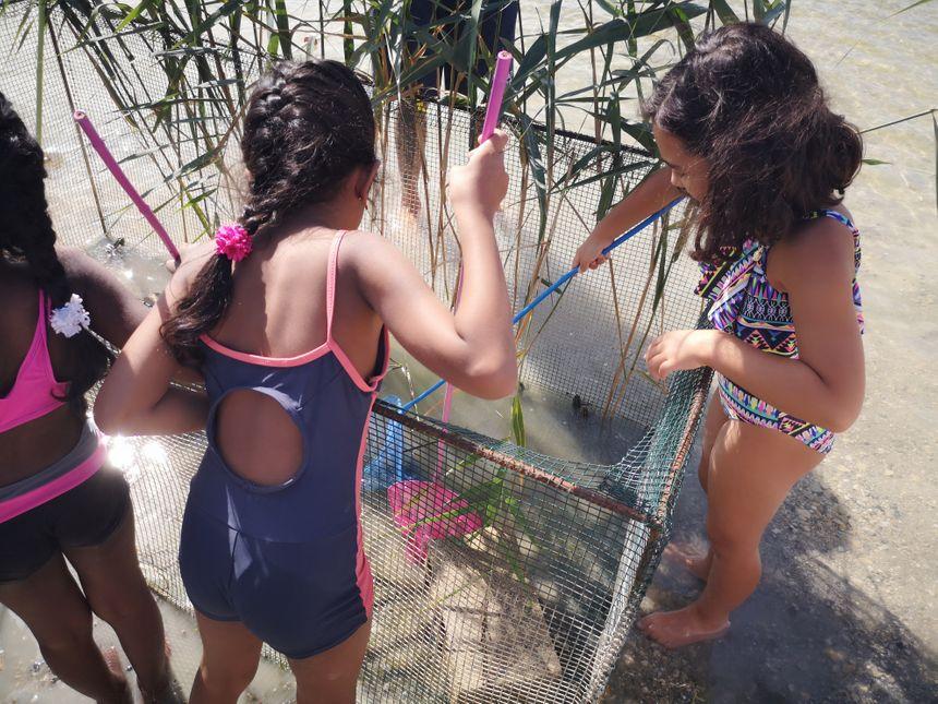 D'abord attraper les grenouilles dans une épuisette