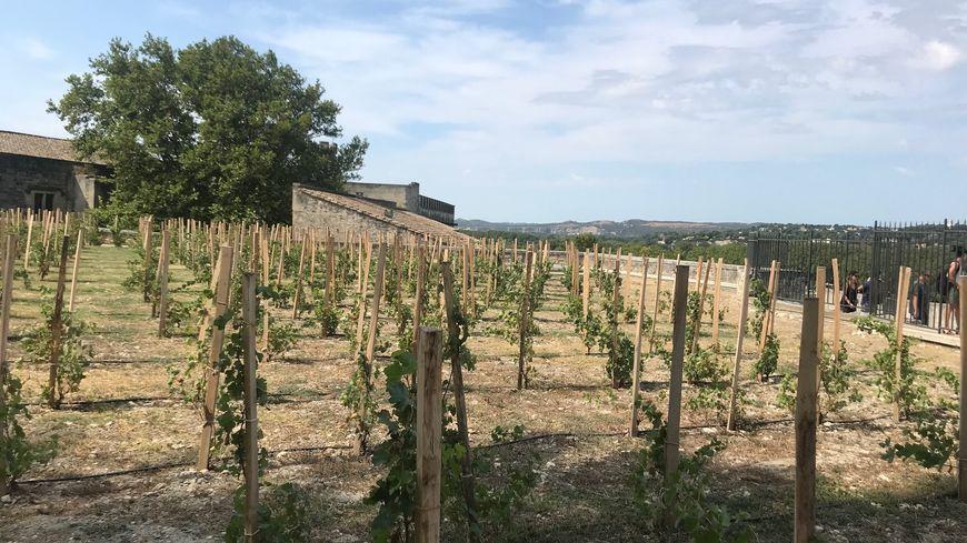 Le clos de la vigne, au Palais des Papes à Avignon.