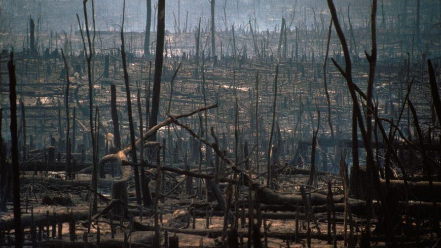Destruction volontaire de la foret vierge amazonienne par incendie afin de créer des espaces reserves a l'elevage bovin, au Bresil.