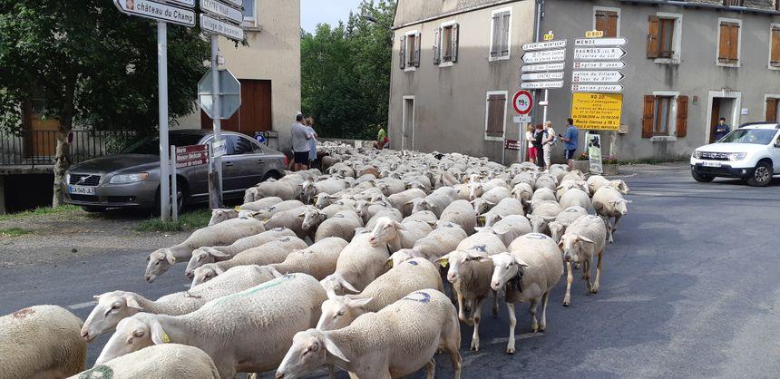 Les sonnailles chantent le passage du troupeau, alertant les habitants des villages traversés qui viennent profiter de la beauté de l'événement.