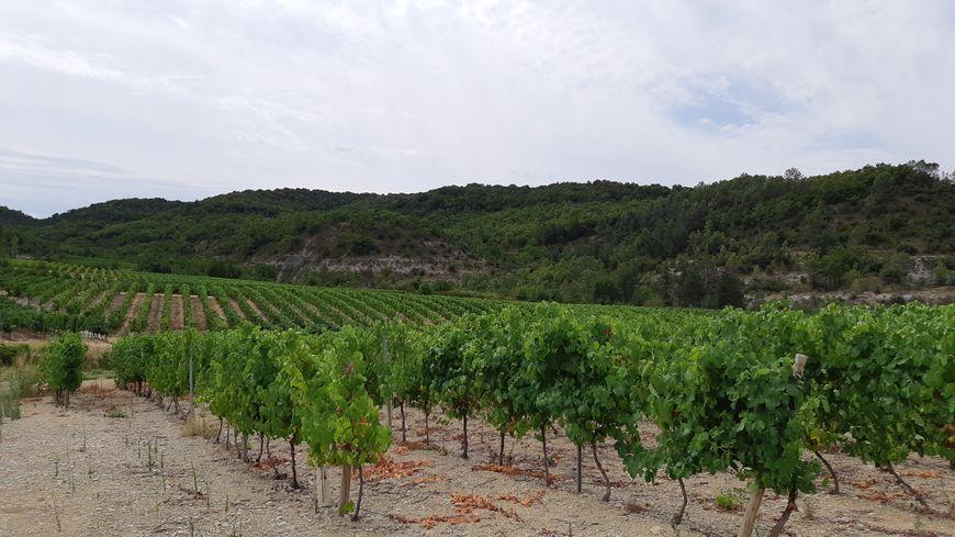 Le domaine Reverger à Pradons vient d'être racheté et confié à une jeune viticultrice