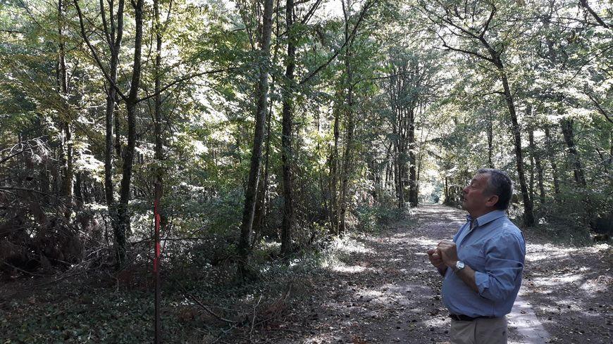 Xavier du Fontenioux constate les dégâts de la sécheresse dans sa forêt d'Azay-le-Rideau