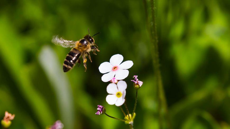 La production de miel en Béarn a été meilleure qu'ailleurs