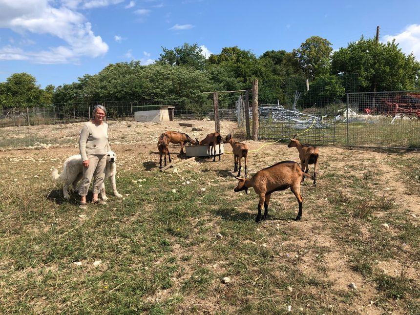 Brigitte Bolze en présence de ses bêtes dans son exploitation à Monsaguel