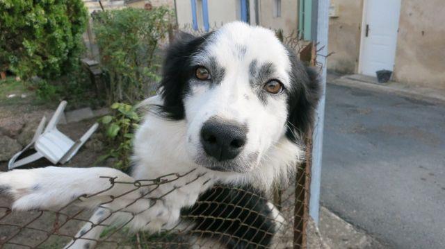 Pascal Salasc est certain d'avoir reconnu son chien Gribouille dans une annonce d'adoption sur internet
