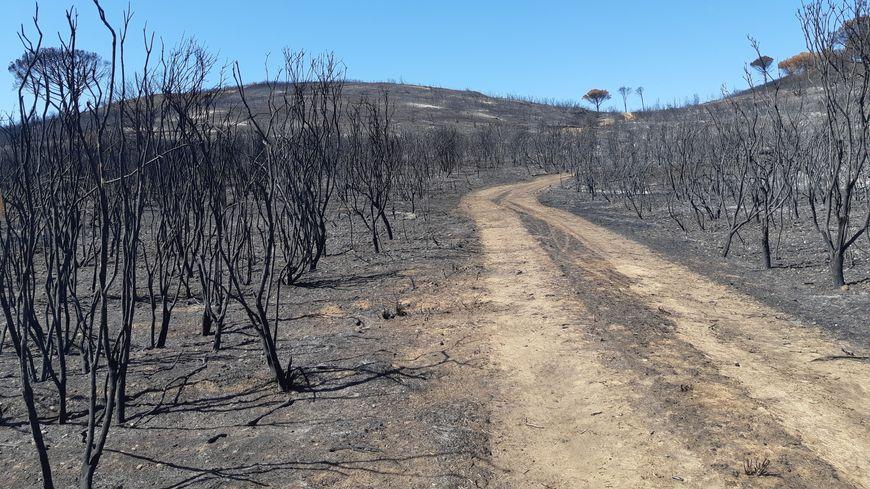 Pour ne plus voir ce genre de paysage dans le Gard, comme ici après l'incendie de Générac