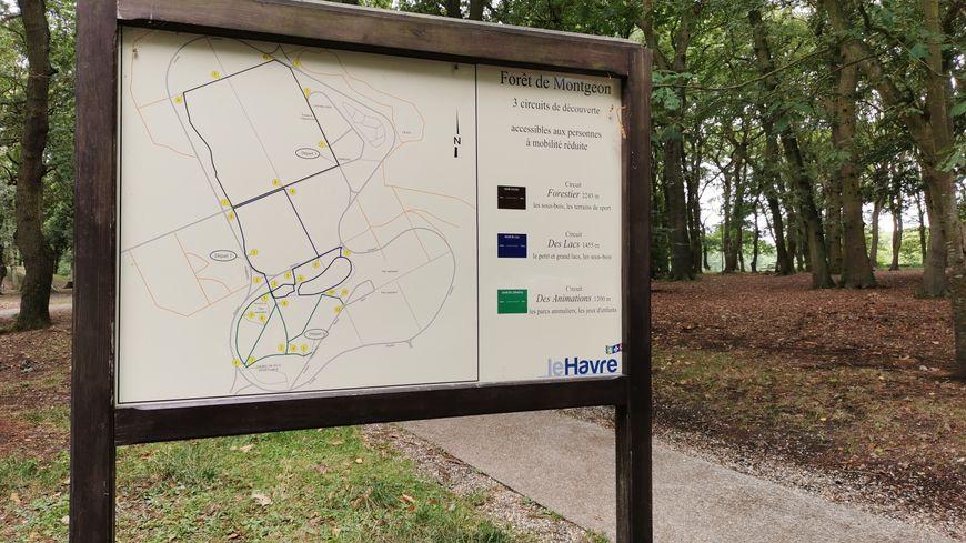 Via une application mobile gratuite, on est guidés dans la forêt de piste en piste, pour un parcours de presque six kilomètres.