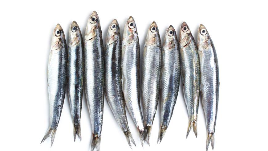 Les poissons bleus, abordables et délicieux