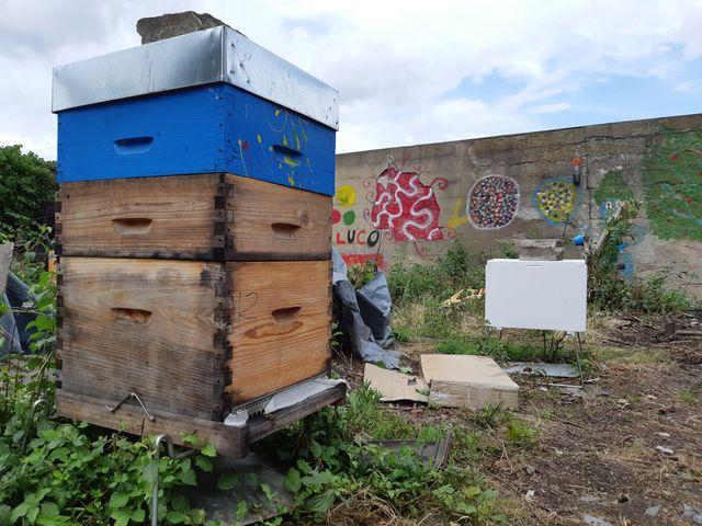 Une ruche à Bobigny