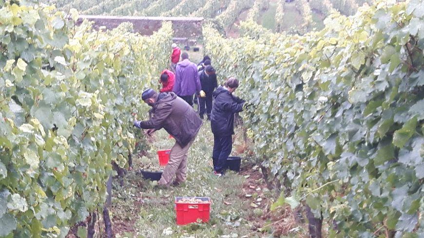 Le Conseil départemental veut venir en aide aux vignerons, en manque de personnel.