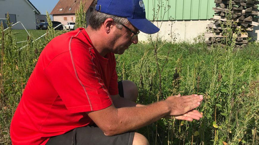 Eric Gerber cultive du chanvre depuis quelques mois