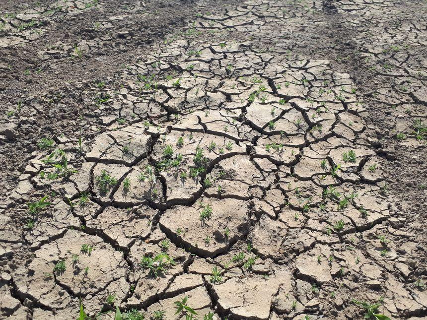 Le barrage de la Sep s'est asséché d'autant plus vite qu'il n'a été rempli qu'à 30% à cause du manque de pluie.