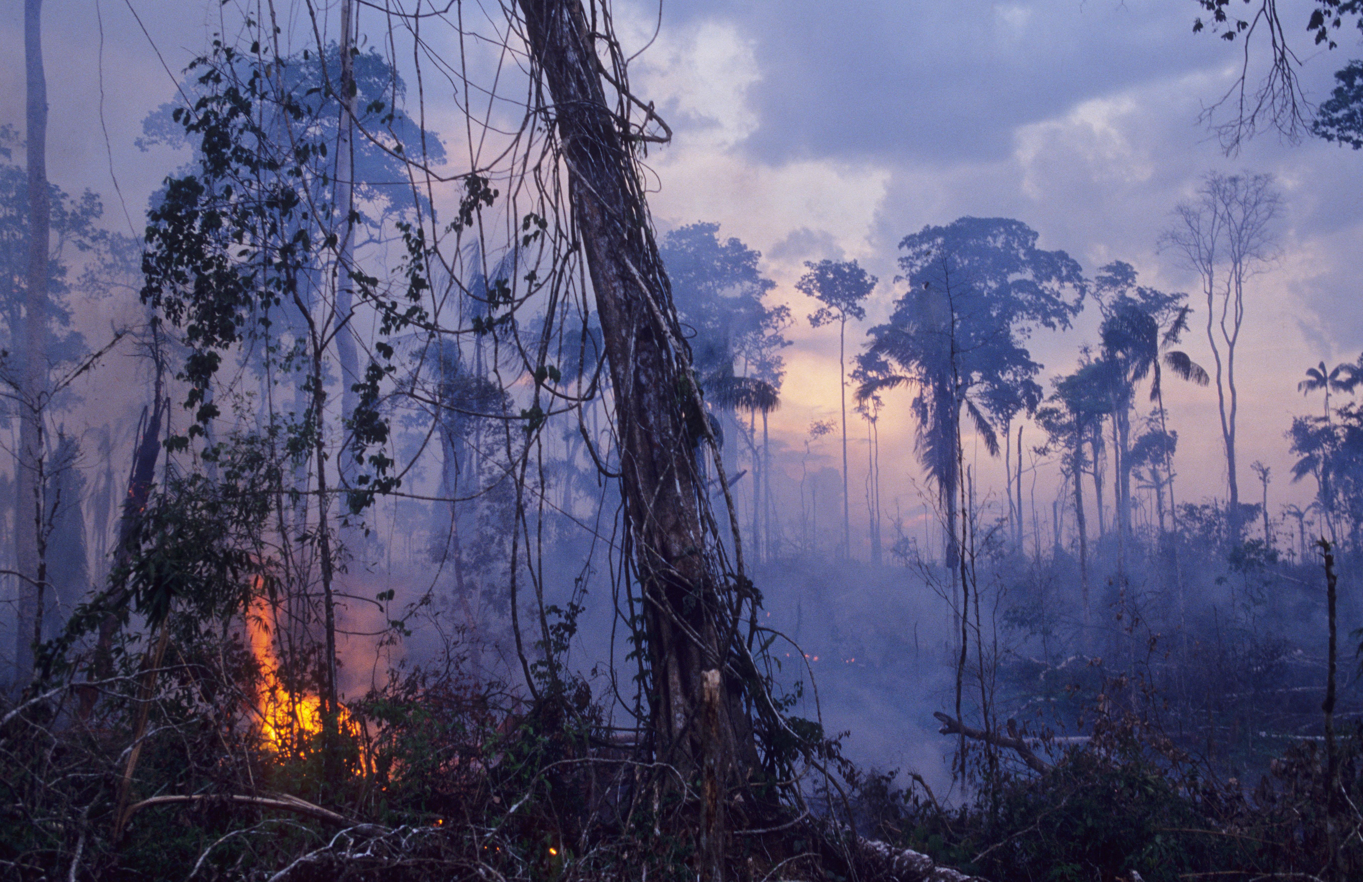 Foret Amazonienne Que Serait La Terre Sans Son Poumon