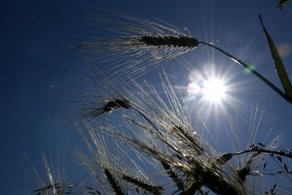 Comment réconcilier agriculture et climat ?