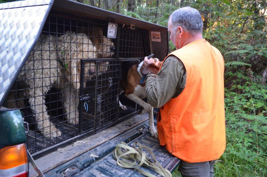 Les chiens étaient impatients de repartir à la chasse