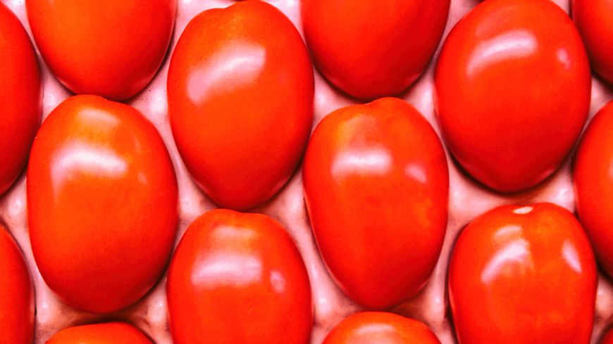 Tomates hybrides F1