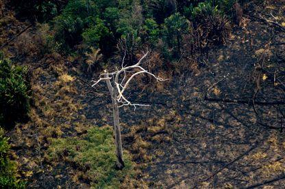 """Vue aérienne d""""une étendue de forêt nettoyée par un incendie dans les environs de Boca do Acre, dans le bassin amazonien au nord-ouest du Brésil, le 24 août 2019."""