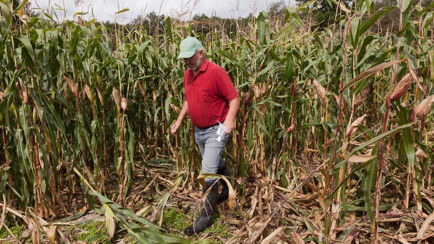 Les indemnisations aux agriculteurs ont frôlé les 900.000 euros