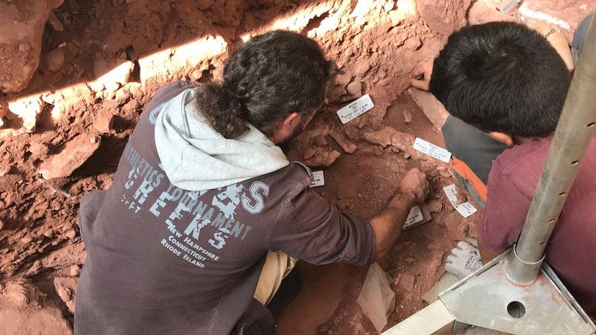 Ces deux archéologues mettent à jour des ossements de mammouth