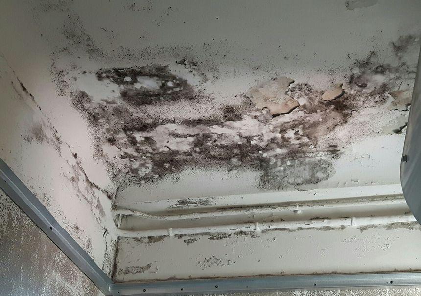 Les moisissures ont envahi murs et plafonds du logement