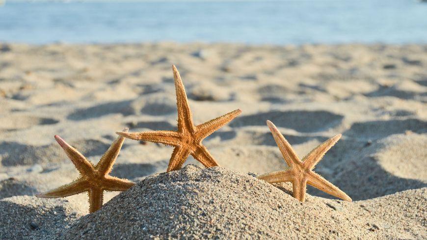 Sur la plage abandonnée... coquillages et crustacés... (illustration).