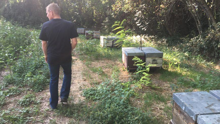 Gaël Arnaud (sur la photo) et sa femme Gaëlle Tirard, apiculteurs, ont installé 56 de leurs 200 ruches près du parc Jouvet à Valence.