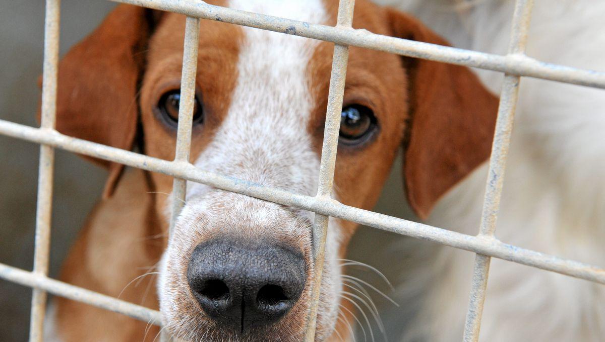 Trois ans de prison dont deux ferme pour avoir jeté un chien du troisième étage à Montpellier