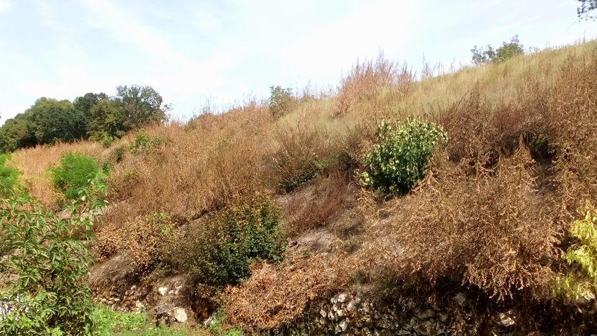 """Pour la SNCF, la végétation peut fragiliser les talus des voies ferrées. Les riverains, eux dénoncent un """"massacre à la sulfateuse"""""""