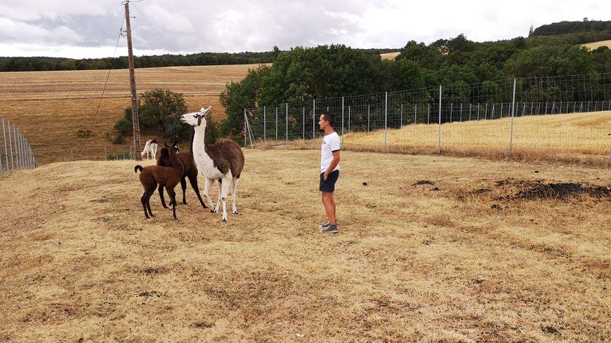 Quentin Duret avec ses lamas