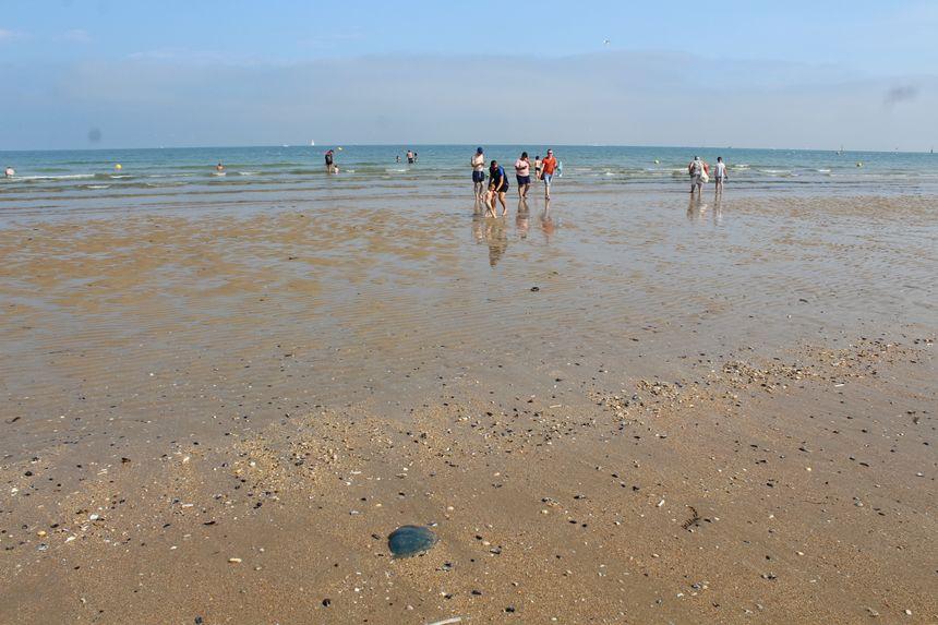 Parfois à moitié enfouies dans le sable, les méduses sont difficiles à repérer et il est facile de se faire piquer