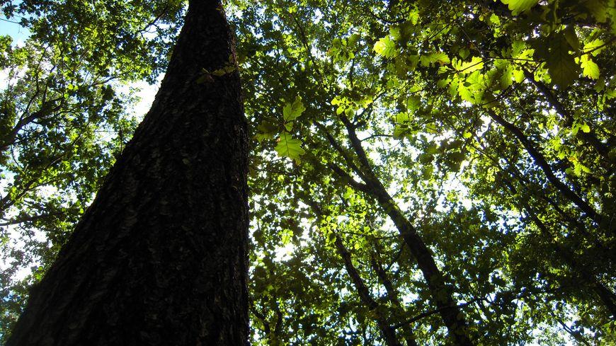 La sécheresse tue certaines espèces d'arbres et la composition floristique de la forêt va changer.