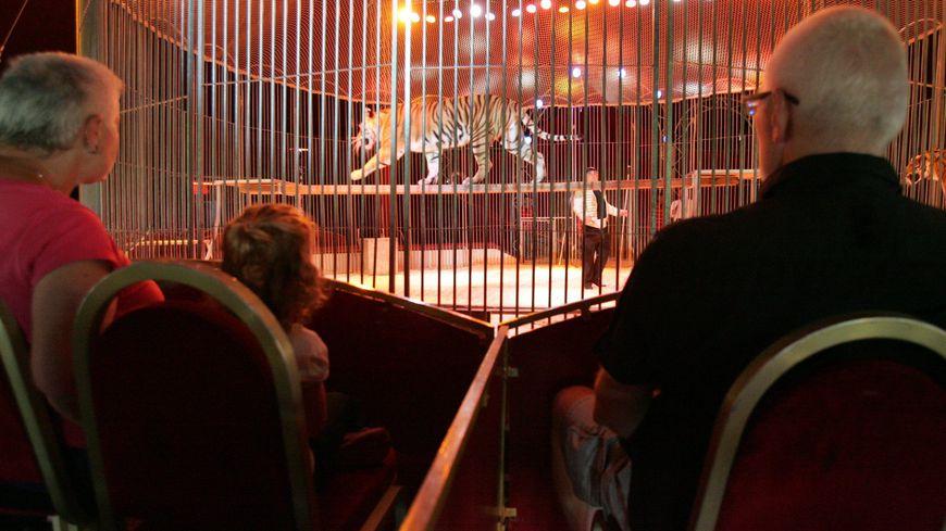 Un tigre dans un cirque - Photo d'illustration.