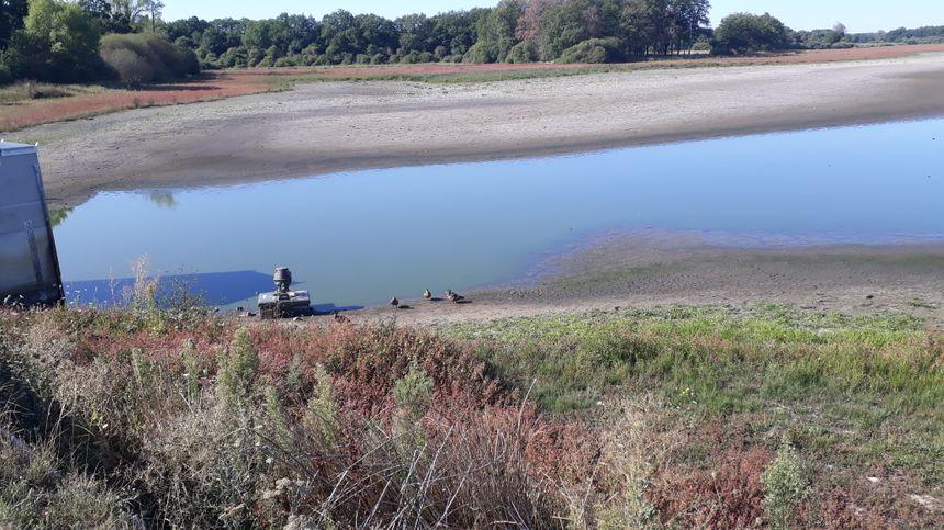 Les oiseaux sont rares à l'étang des landes