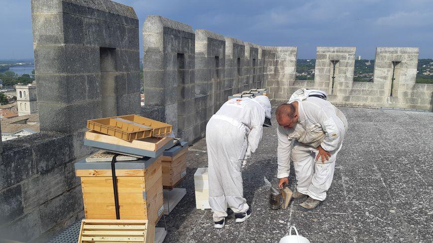 Etape bilan pour les six ruches installées sur la tour Saint Laurent depuis début Avril