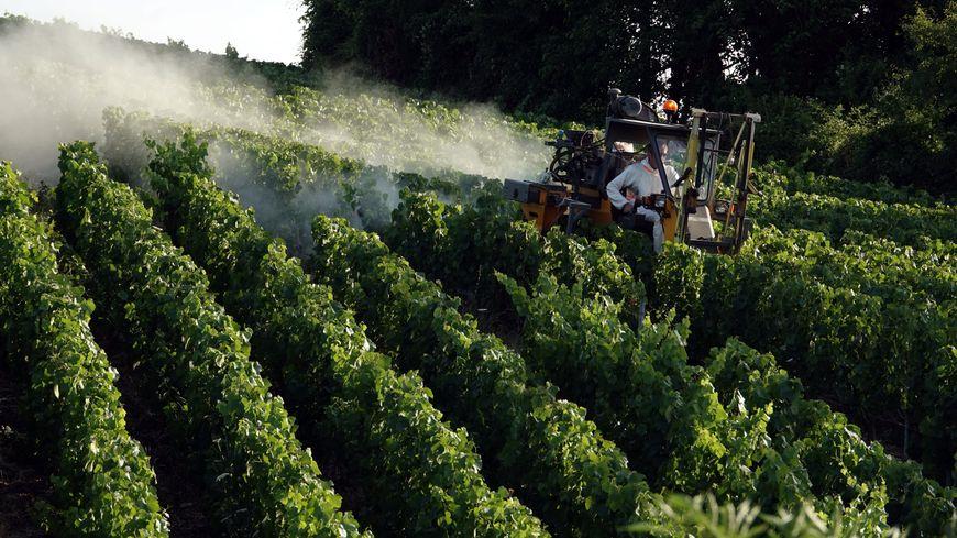 Traitement préventif contre le mildiou par épandage depuis un tracteur dans le vignoble de Champagne en juillet 2019 (photo d'illustration)